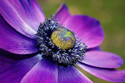 Positively Purple Art Print by Kjirsten Collier