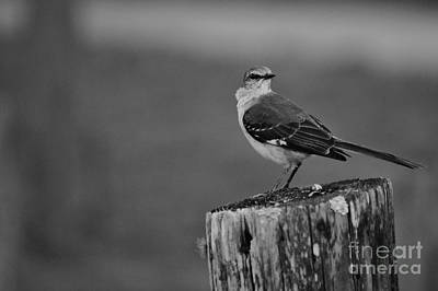 Photograph - Post Perch by Lynda Dawson-Youngclaus