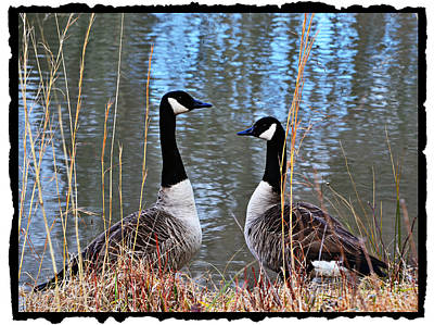 Maydale Photograph - Postcard From Nature by Mary Zeman