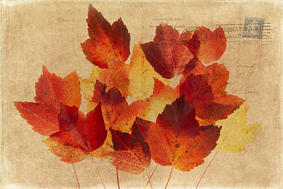 Photograph - Postcard Leaves by Rebecca Cozart