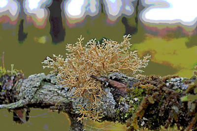 Posterized Antler Lichen Art Print by Cathy Mahnke