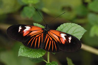 Risultati immagini per butterfly malaysia
