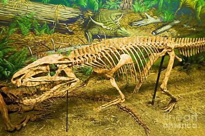 Triassic Photograph - Postosuchus Fossil by Millard H. Sharp