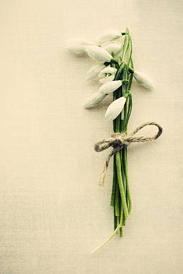 Snowdrops Wall Art - Photograph - Posy Of Snowdrops by David Ridley