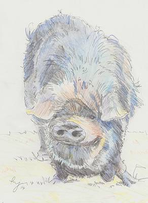 Drawing - Pot Bellied Pig by Mike Jory