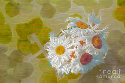 Photograph - Pot Of Daisies 02 - S13ya by Variance Collections