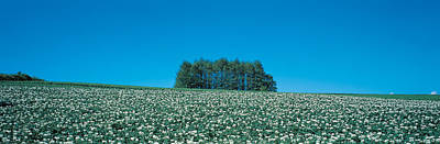 Potato Field Biei-cho Hokkaido Japan Print by Panoramic Images