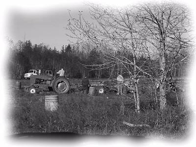 Photograph - Potato Harvest 1 by Gene Cyr