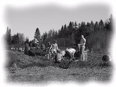 Photograph - Potato Harvest 19 by Gene Cyr