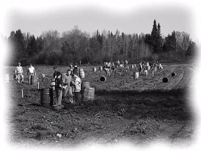 Photograph - Potato Harvest 2 by Gene Cyr