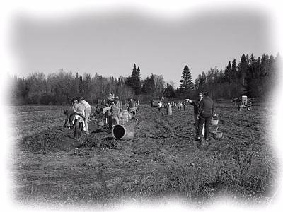 Photograph - Potato Harvest 20 by Gene Cyr