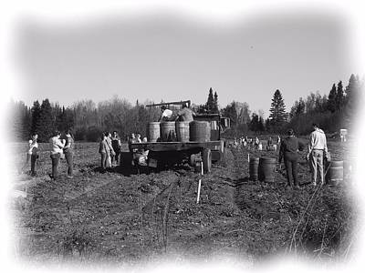 Photograph - Potato Harvest 3 by Gene Cyr