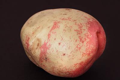 Basic Photograph - Potato by Tom Gowanlock