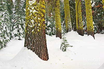 Snowstorm Photograph - Potential - Winter Scene Of Badger Pass In Yosemite National Park by Jamie Pham