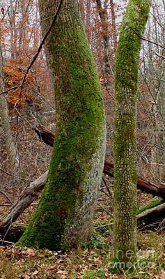 Pucker Up - Potomac Oldgrowth  by Joshua Bales