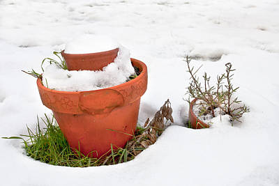 Pots In The Snow Art Print by Tom Gowanlock
