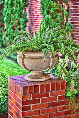 Potted Fern Original
