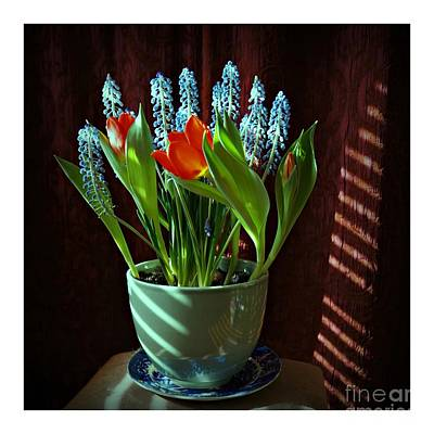 Photograph - Potted Flowers In The Shadows by Patricia Strand