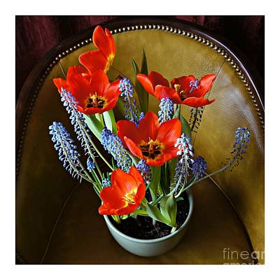 Photograph - Potted Flowers On A Leather Chair by Patricia Strand