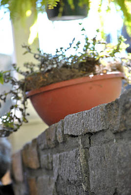 Photograph - Potted Plant by Misty Stach