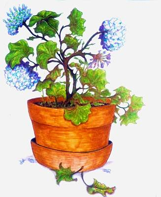 Drawing - Potted Plant by Rae Chichilnitsky