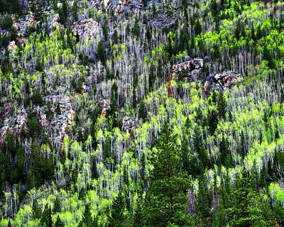 Jerry Sodorff Royalty-Free and Rights-Managed Images - Poudre River Canyon Spring 15086 by Jerry Sodorff