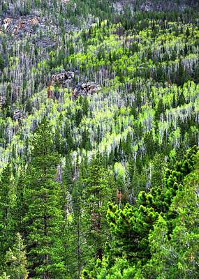 Jerry Sodorff Royalty-Free and Rights-Managed Images - Poudre River Canyon Spring 15089 by Jerry Sodorff