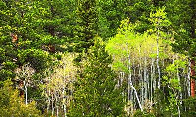 Jerry Sodorff Royalty-Free and Rights-Managed Images - Poudre River Canyon Spring 15104 by Jerry Sodorff
