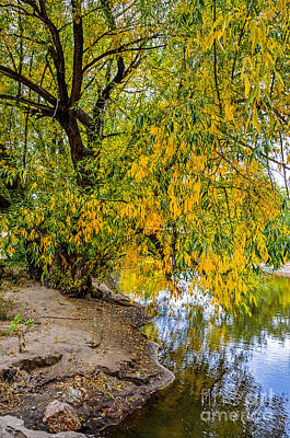 Fort Collins Photograph - Poudre River by Baywest Imaging