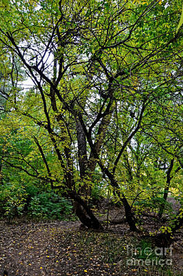 Fort Collins Photograph - Poudre Trees by Baywest Imaging