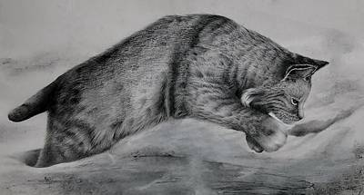Bobcats Drawing - Pounce by Jean Cormier