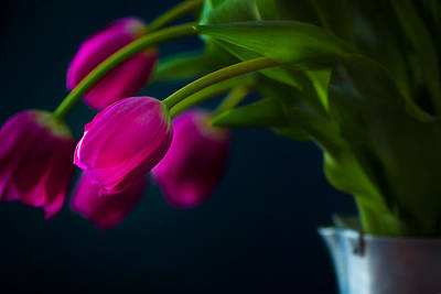 Photograph - Pouring Tulips by Joan Herwig