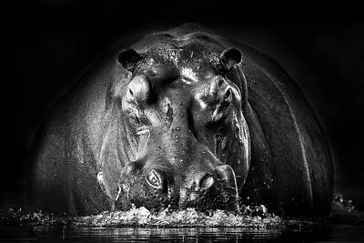 Hippopotamus Photograph - Power by Gorazd Golob
