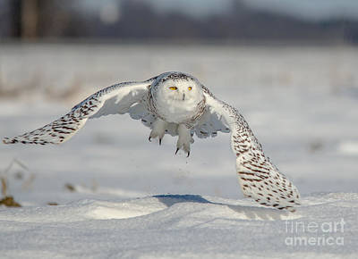 Photograph - Power In Flight by Cheryl Baxter