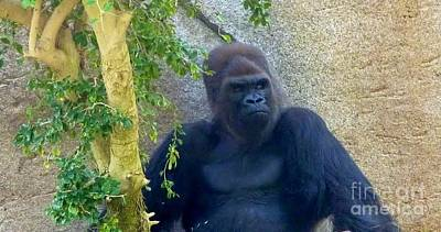 Photograph - Powerful Female Gorilla by Susan Garren