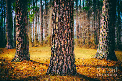 Photograph - Powerful Pines II by Dan Carmichael