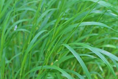 Andrea Grist Wall Art - Photograph - Praire Grass by Andrea K Grist