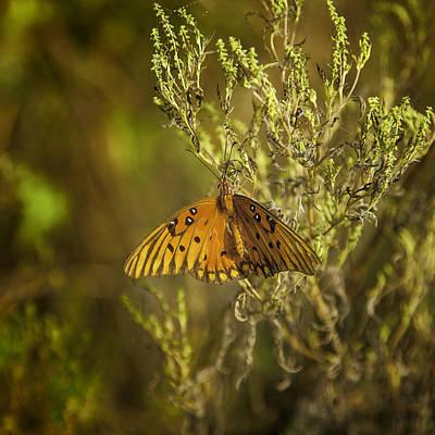 Prairie Butterfly Art Print