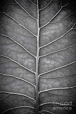 Prairie Dock Leaf Monochrome Art Print by Tim Gainey