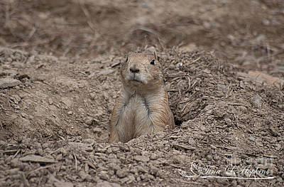 Photograph - Prairie Dog 20120714_207a by Tina Hopkins