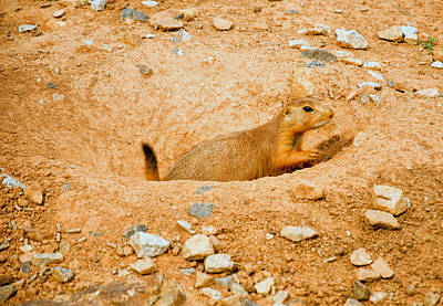 Digital Art - Prairie Dog Digs by Chris Flees