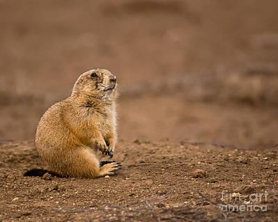 Prairie Dogs Photograph - Prairie Dog On Dirt by Robert Frederick