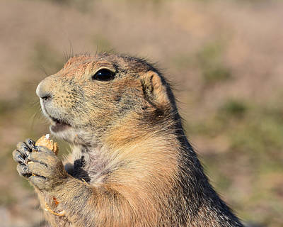 Robin Williams Photograph - Prairie Dog by Robin Williams