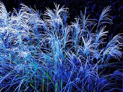Photograph - Prairie Grass Sparklers by Rita Mueller