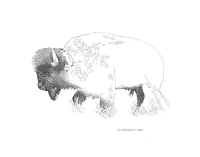 Wall Art - Drawing - Prairie Grazer by Paul Shafranski