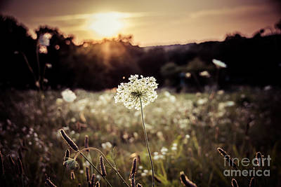 Photograph - Prairie Lace Sunset by Julie Clements
