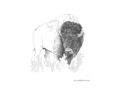 Wall Art - Drawing - Prairie Majesty by Paul Shafranski