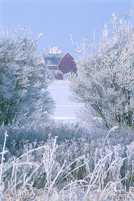 Photograph - Prairie Morning Frost by Bruce Thompson