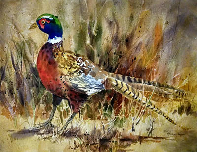 Upland Game Birds Painting - Prairie Pheasant by Michele Thorp