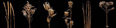 Prairie Plant Life Original by Steve Gadomski